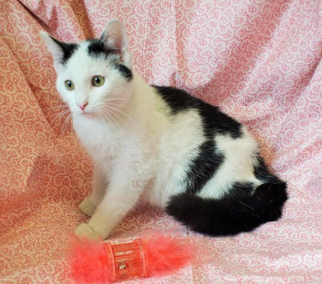 URGENT #Adopt #Rescue LIZZIE baby cat. Beechbottom, WV. Plz give this pretty girl a chance! https://t.co/aK8athGonA http://t.co/LF3y6MhEl7