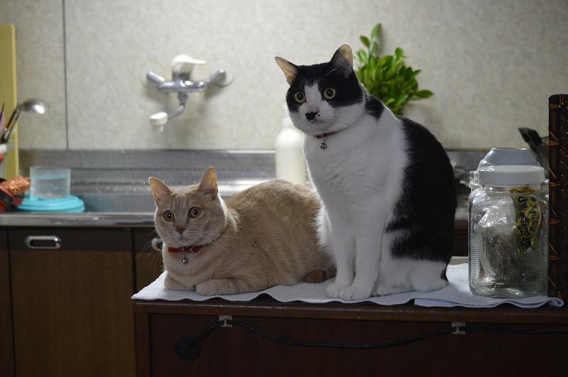 良いなあ、猫のいる生活。 RT @beibon50: 現在の我が家。 http://t.co/NvPmXkXw9U