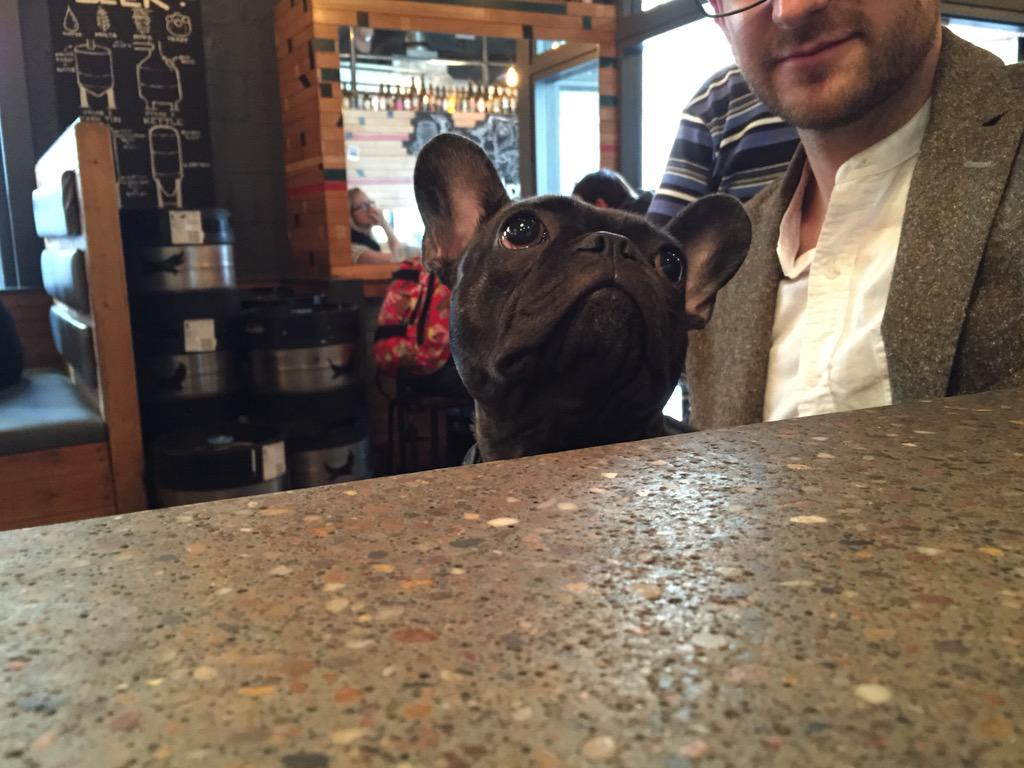 Dugs dugs dugs. We love dugs. #dugsinpubs #dogfriendly. http://t.co/cXoFbTUcpl