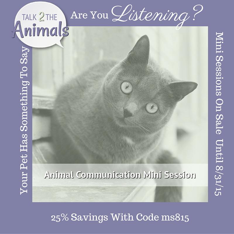 1 more #Talk2theAnimals promo #petchat http://t.co/FG2247VrH9 sale on #animalcommunication mini session http://t.co/dvKhBSG4PD