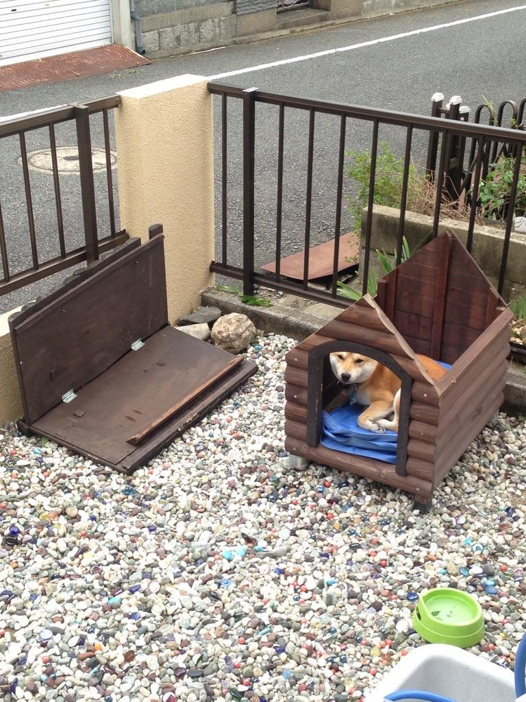 【まめの台風被害】 pic.twitter.com/s41g0Ok1rm