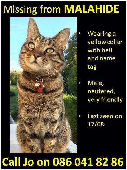 Pls RT: Cat missing in Malahide, dearly missed by his owners. Last seen a week ago. Name: Poes. #MissingMalahideCat http://t.co/4h2LRH7UjL