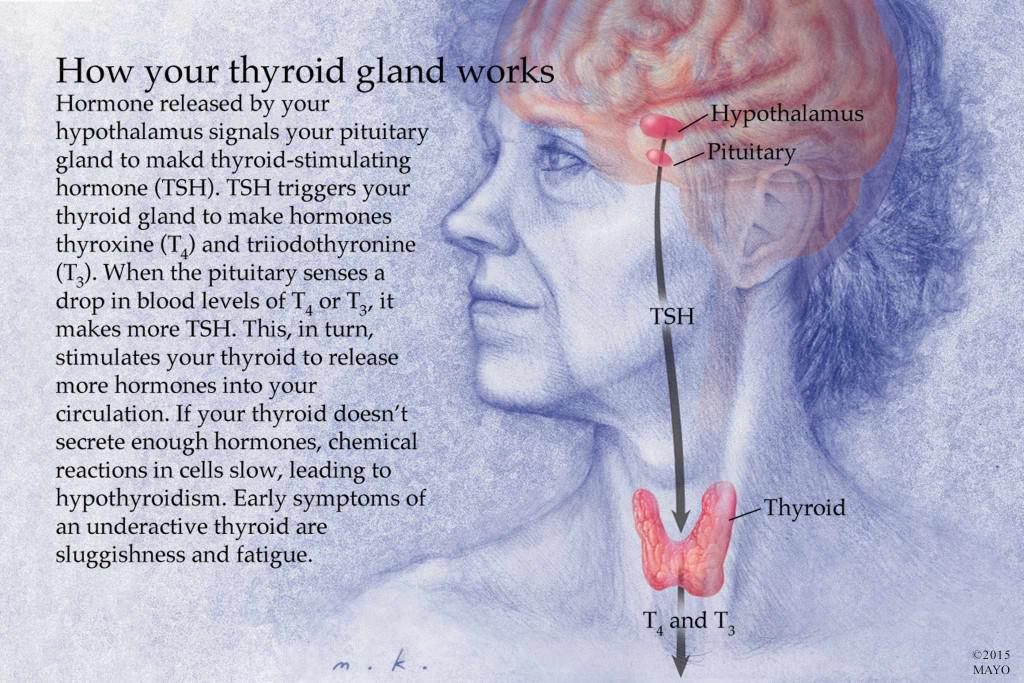 hypothyroidism thyroid hormone and mayo clinic