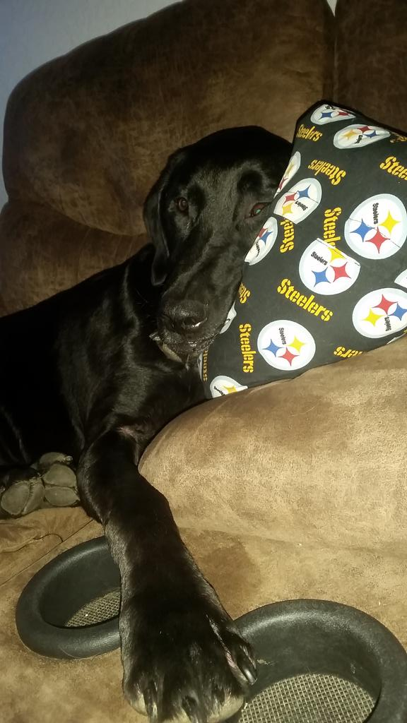heather altenhof on twitter the steelers signed michael vick
