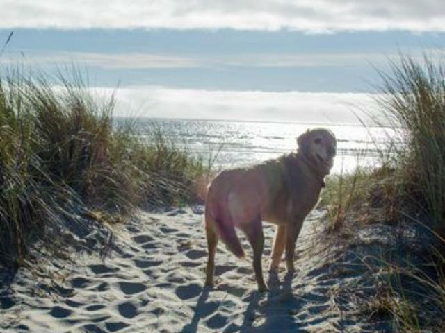 Tearjerker! Dog w/Terminal Cancer gets first view of #ocean. http://t.co/xICv4Z0hwk cc @JudyFiehler @wallacejnichols http://t.co/BZTlC6A1zy