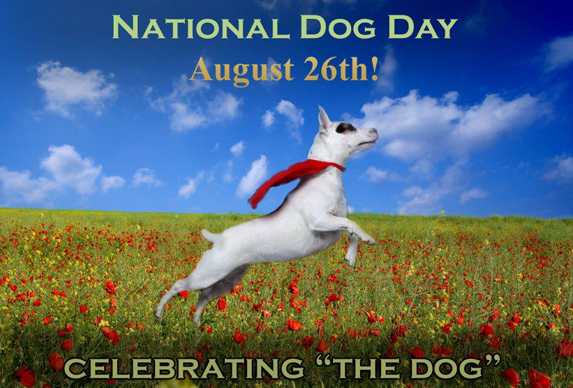 """HAPPY NATIONAL DOG DAY! Keep those photos coming today for our """"World's Cutest Dog"""" Photo Contest! #nationaldogday http://t.co/IVcHqKfH4b"""
