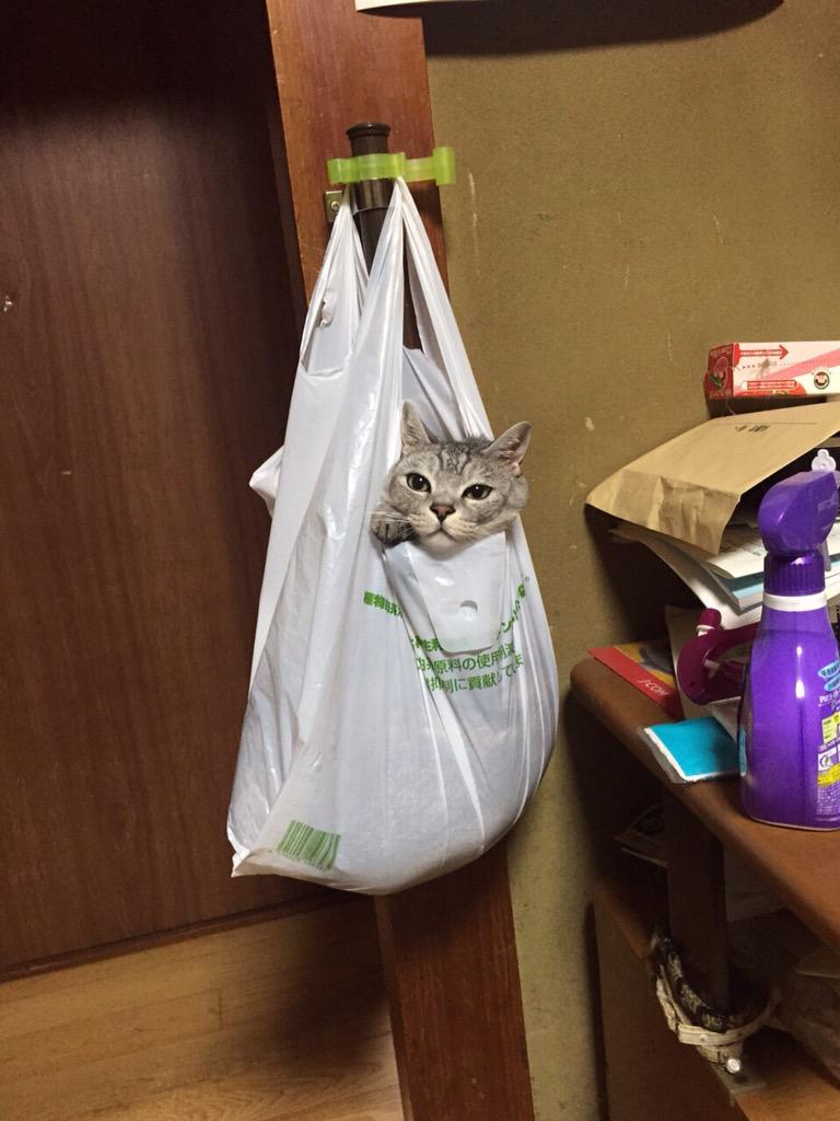実家帰ったら猫があられもない姿で晒されてたんだけどけっこうリラックスした顔してんなお前 pic.twitter.com/tIaddNmKYz
