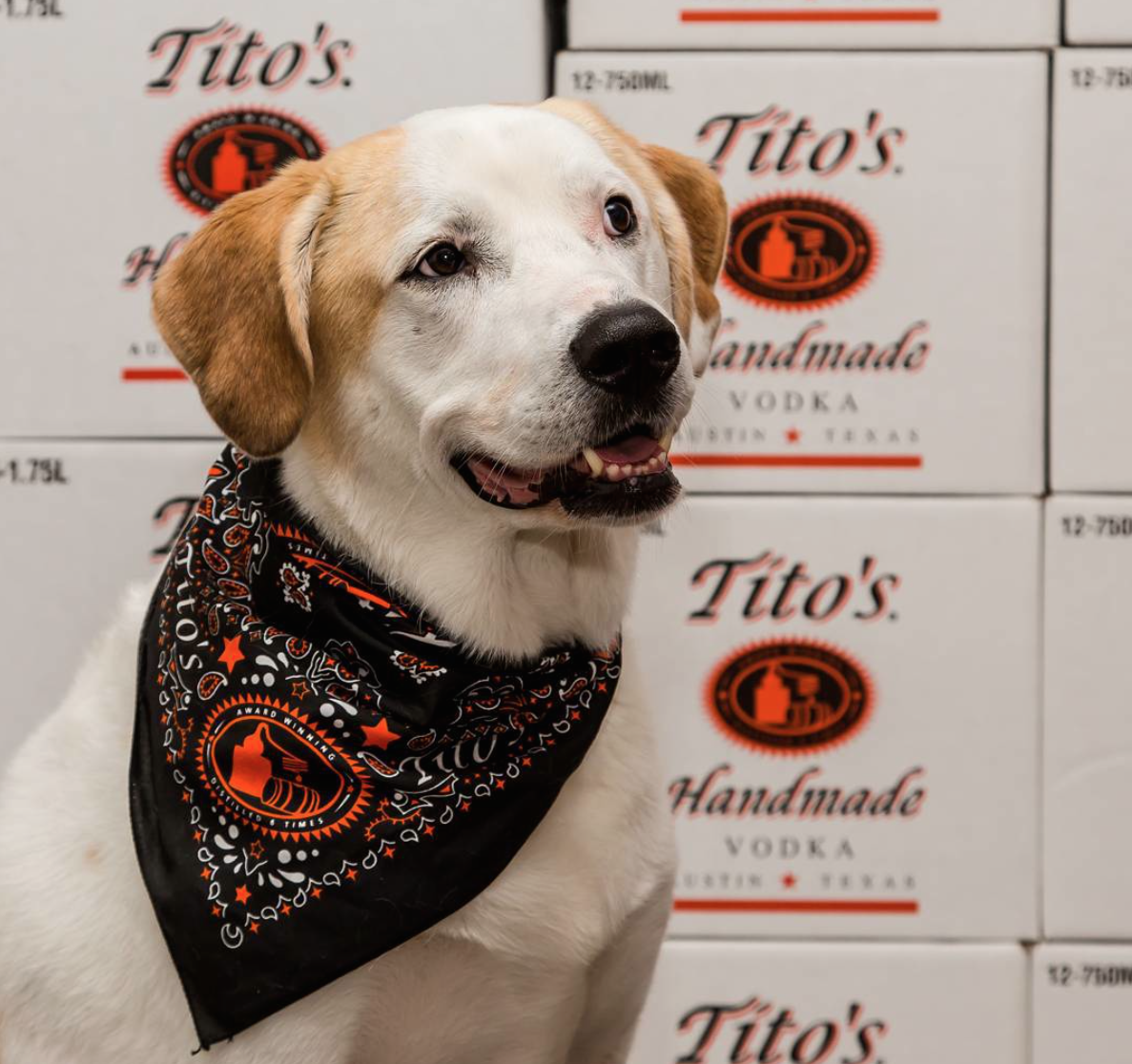 Today is the day! Come celebrate #NationalDogDay w/ @TitosVodka benefiting @Emancipet. Don't miss the furry fun! http://t.co/BzboEjlFrr