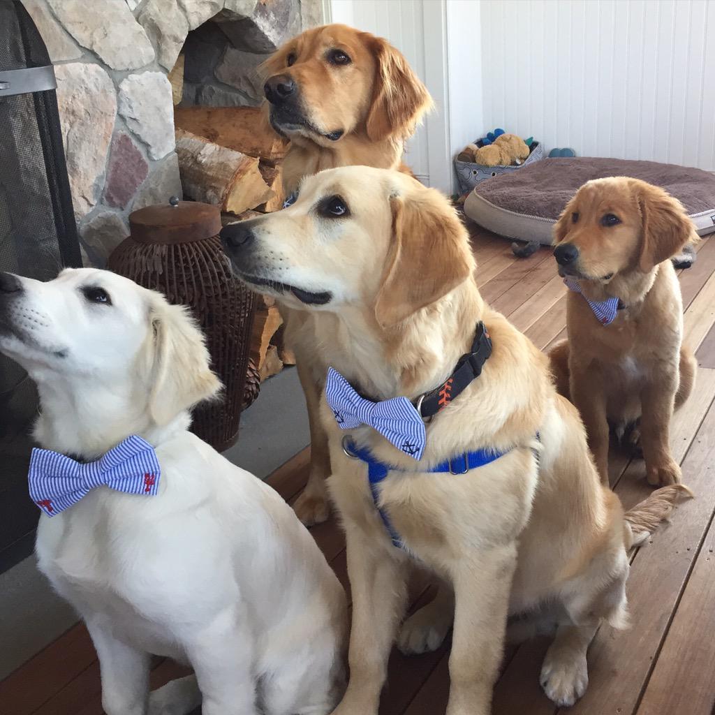 @MensHealthMag here's my squad.. Always dressed to impress #NationalDogDay http://t.co/e8j9V8Y6Lj