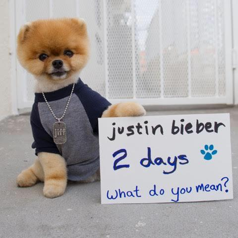 Yep @jiffpom knows. What Do You Mean? #2Days