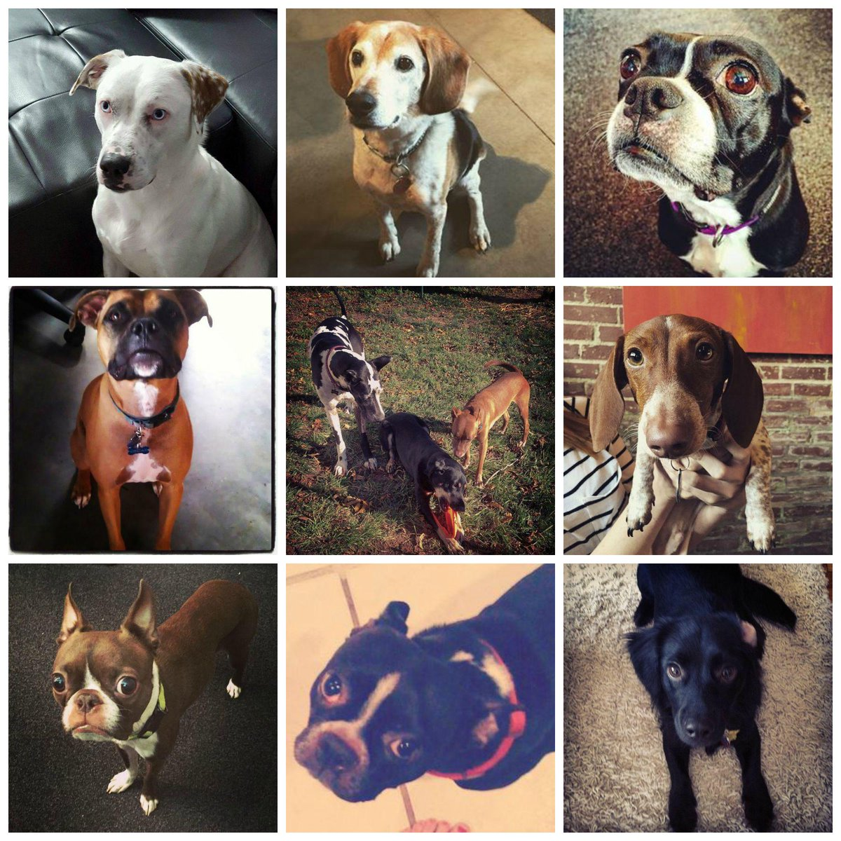 Every office needs a pup or 11. Happy #NationalDogDay #DogsOfTG ❤️ http://t.co/GiZdFvf7Yf