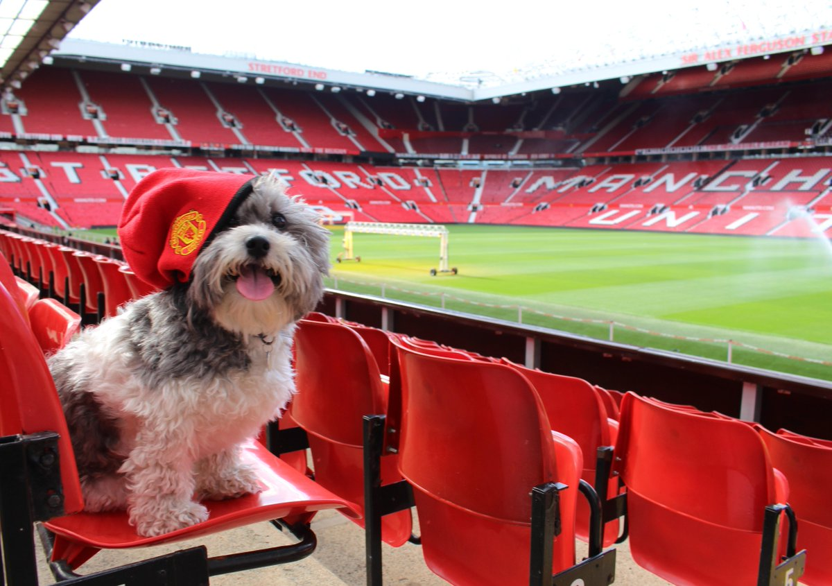 Man Utd Foundation On Twitter Is Your Dog A Big Manutd Fan Share Your Snaps To Celebrate Nationaldogday Http T Co R32joyclye