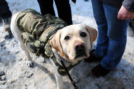 Our Military Working Dogs are more than man's best friend. They're heroes. #NationalDogDay http://t.co/6kMWfua0sx