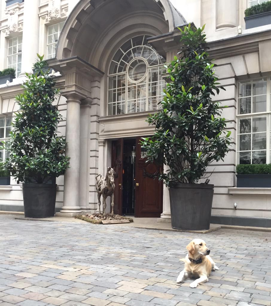 Our Top 5 Dog Friendly Hotels In London Pawpost