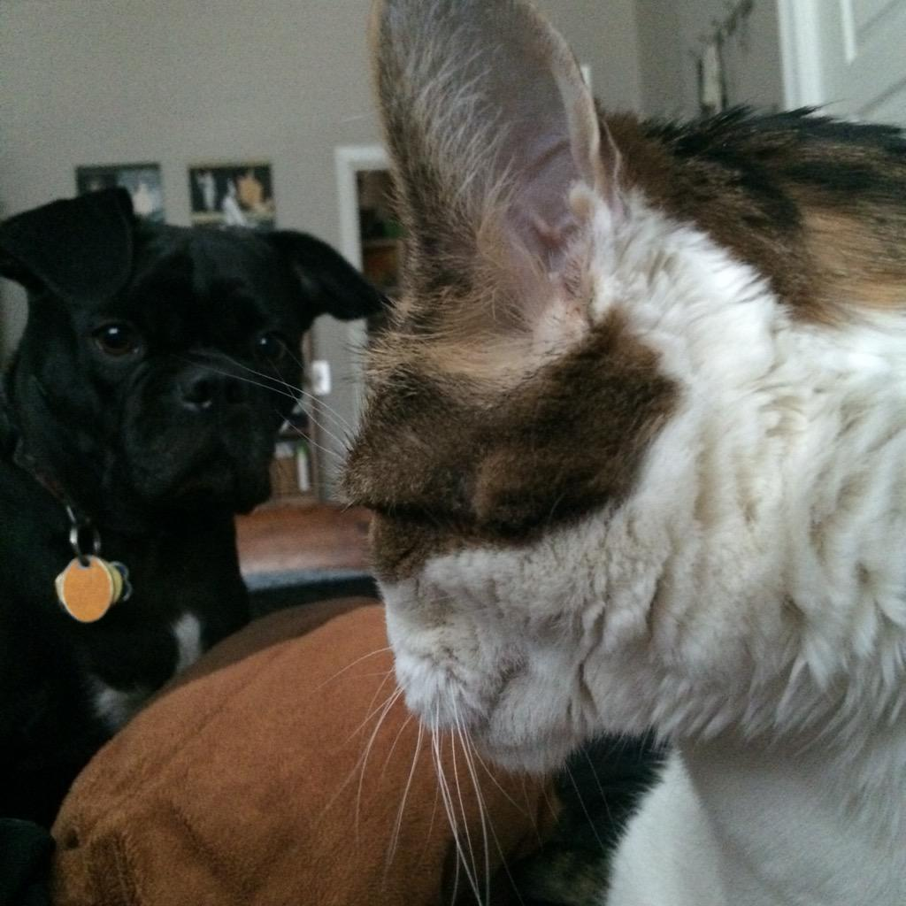 My landlord's afraid of Trout, our lovey bulldog. More of Milo, our 13 y/o cat who only kills via blistering attitude