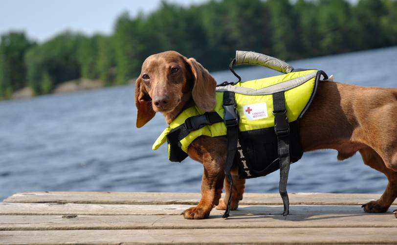 This little wiener dog is celebrating #nationaldogday and being a great #watersafety ambassador. http://t.co/Rn1L85wk7R