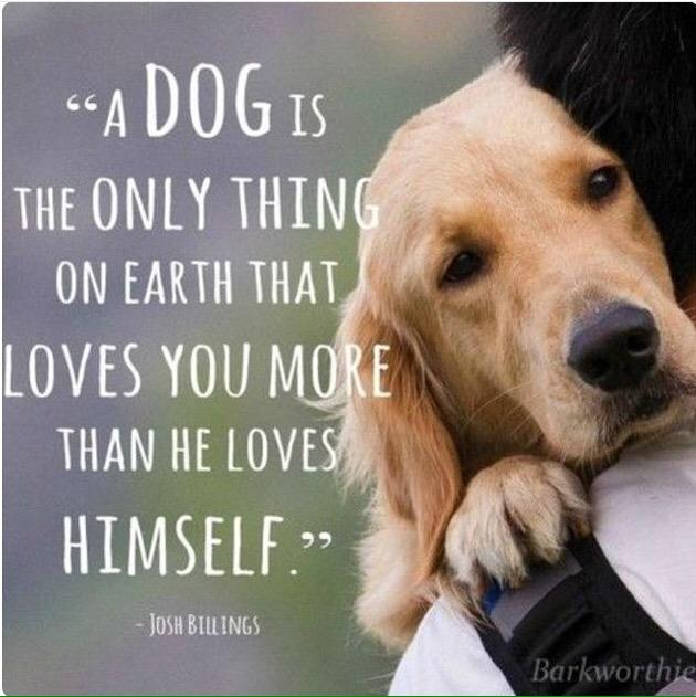 #dog #dogquote #pets #petquote #love http://t.co/vIc0AKfh0V