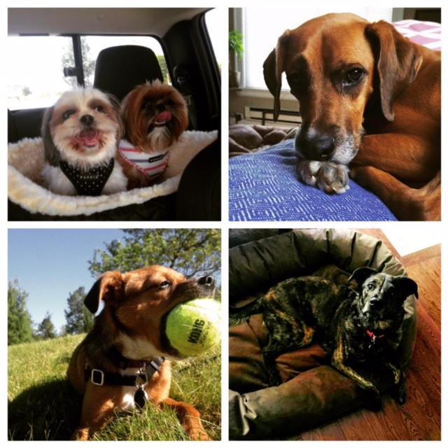 Happy National Dog Day from some of the pups at @BarokasPR! #NationalDogDay