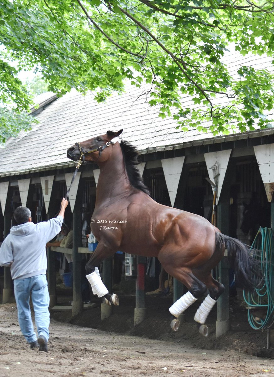 Air Horse One. #AmericanPharoah airborne after arriving at Saratoga this afternoon. http://t.co/eyGYeOsxgw