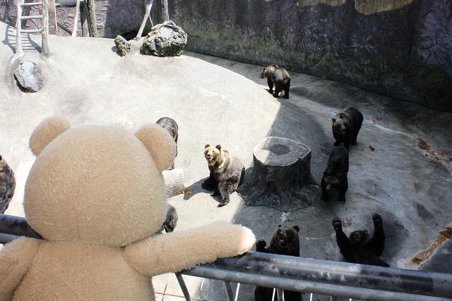 わあ…熊だ…ほんものだ…【テッド】 #変なクマ pic.twitter.com/kxw6OmJZNE