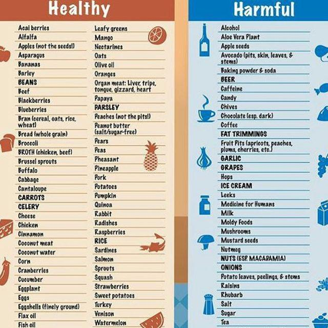 Hi Puppy On Twitter Make Sure You Know What Your Dogs Can And Cannot Eat This List Is A Great Reference For May Be Harmful To