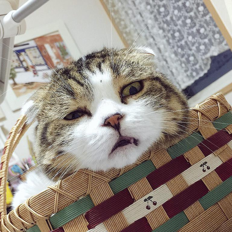 お願いだからこれ以上、その顔で作業見守るの止めて。 pic.twitter.com/WHTvCJ6UsZ