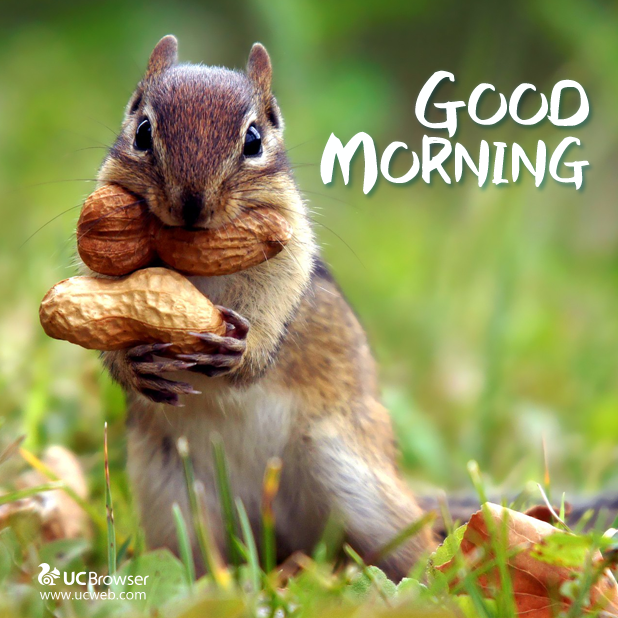 "Good Morning Status Image: UC Browser On Twitter: ""Good Morning! Are You Looking"