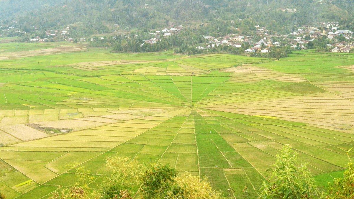 Pesona LINGKO, Sawah Berbentuk Jaring Laba-laba Di Flores NTT - AnekaNews.net