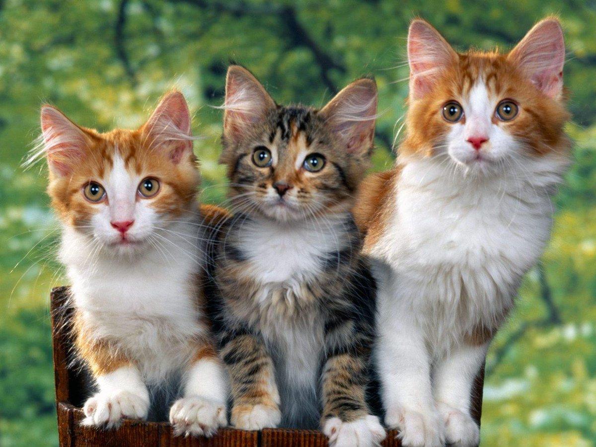 Keistimewaan Dan Kedudukan Kucing Di Dalam Islam - AnekaNews.net