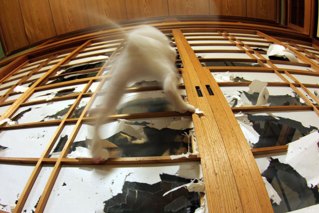 飼い主が猫缶を買い忘れ、大荒れの金曜日。 pic.twitter.com/4SqeX9qtxX