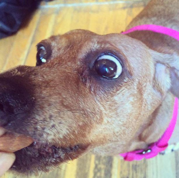 One of many @1000heads #NYC office dogs, Wendy goes nuts for nuts http://t.co/vqZgTVkkBZ http://t.co/xMt7uMVp1C