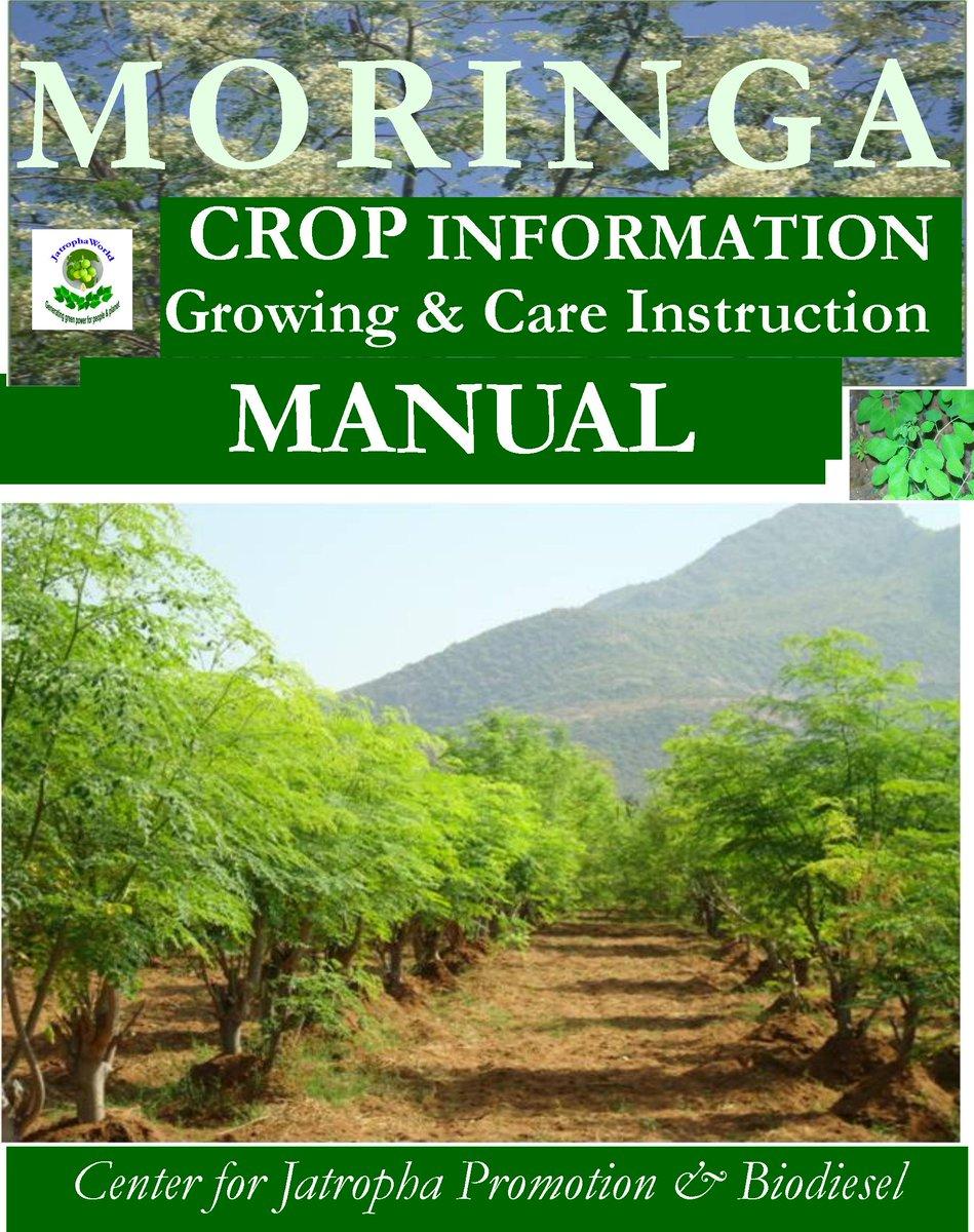 moringa growing guide