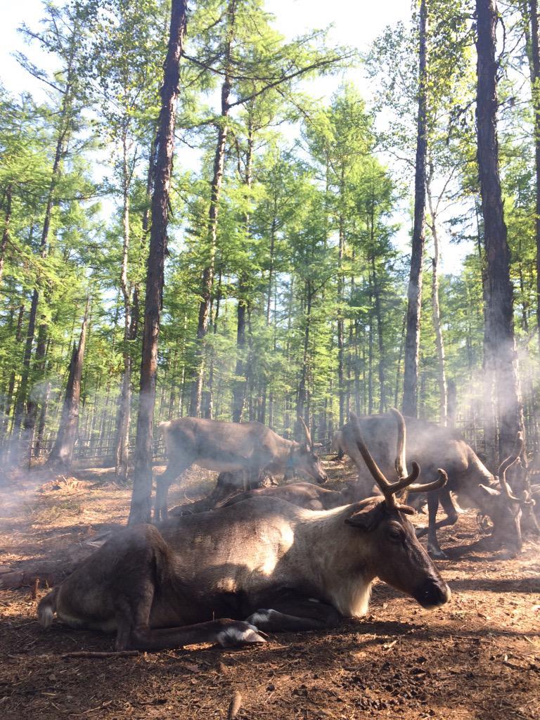 내몽고에는 초원만 있는 것이 아니다. 동쪽은 온통 숲이고 거대한 습지 또한 존재한다. 이곳은 모얼다가국립공원. 한때 어원커 족이 순록을 키우면서 살던 곳. http://t.co/TxYy5EHpqy