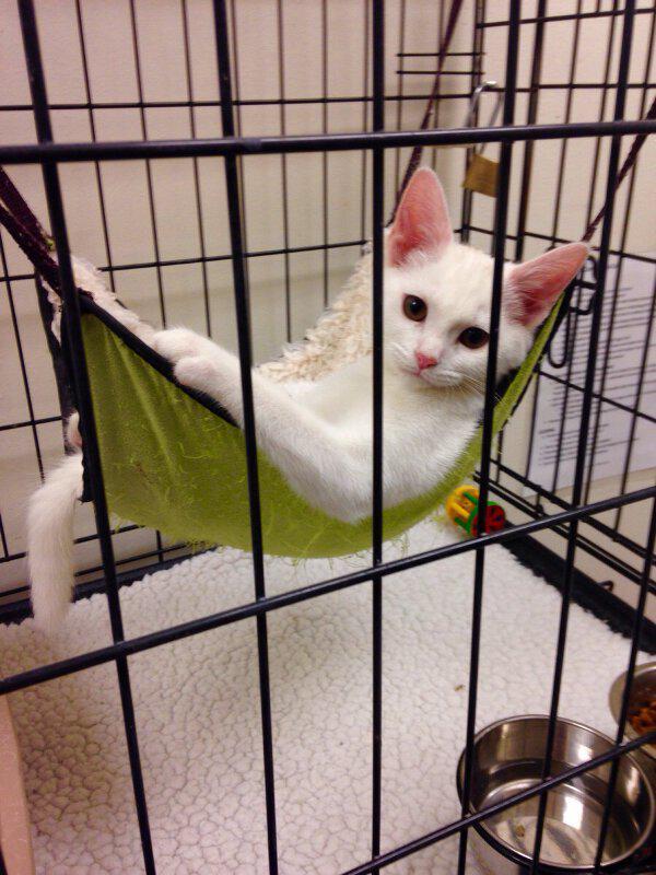 @tatuya01 (暴れるのでゲージに入れられてる...)「猫缶買ってきてくれた?」 pic.twitter.com/rcaLEuhBzd