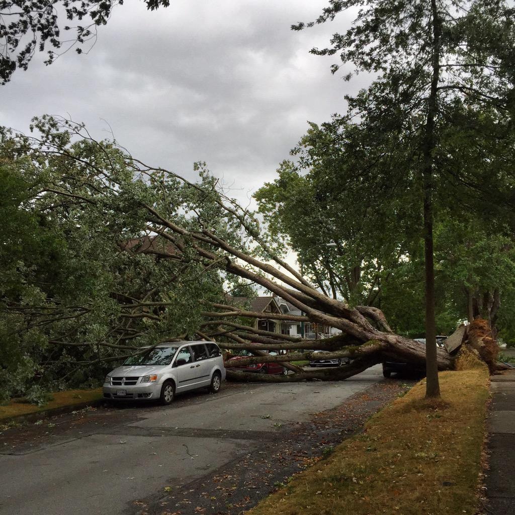 #BCstorm ripping through Vancouver. This tree crashed down and ruptured a gas line in East Van. Many trees down. http://t.co/6MxARWsUYX