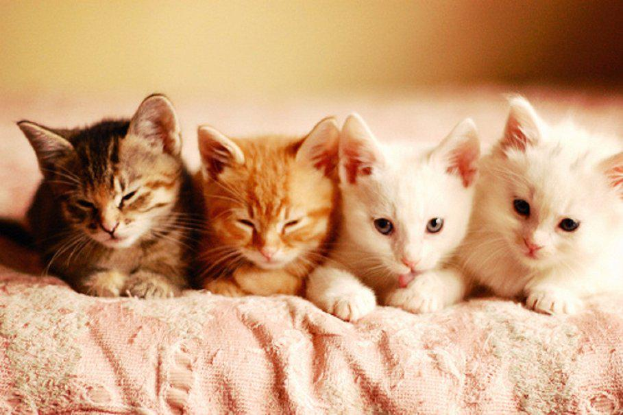 Alright alright  here's some kittens then http://t.co/9pCSbwp9Vd