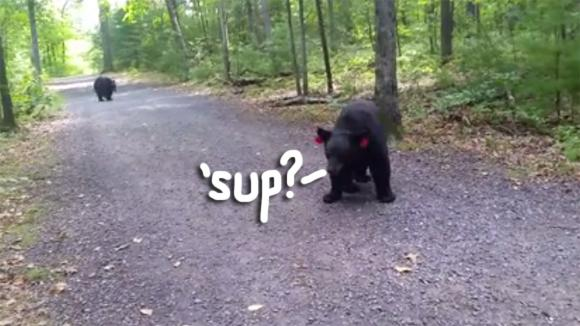 Watch this incredible up-close interaction between a woman and a black bear: http://t.co/CxegjA987U http://t.co/Dfb1XZPy5L