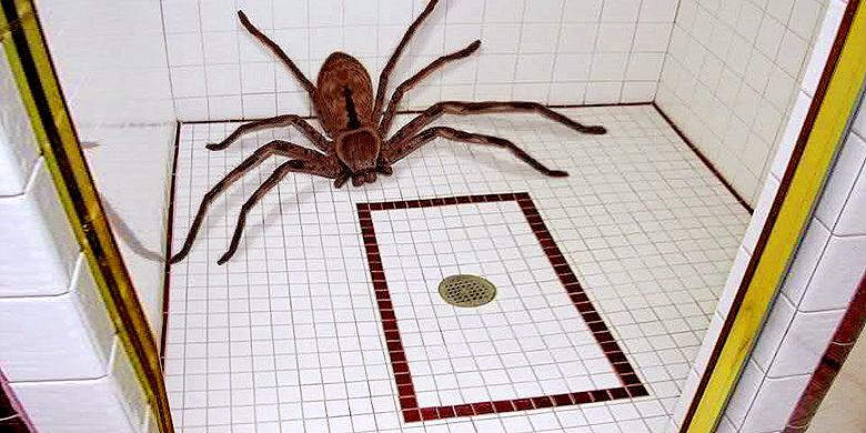 Guy's Masculinity Is Tested To The Limit As He Attempts To Capture Giant Wolf Spider In Ba… http://t.co/i3rC9iUbT1 http://t.co/lY3zWnW6cc