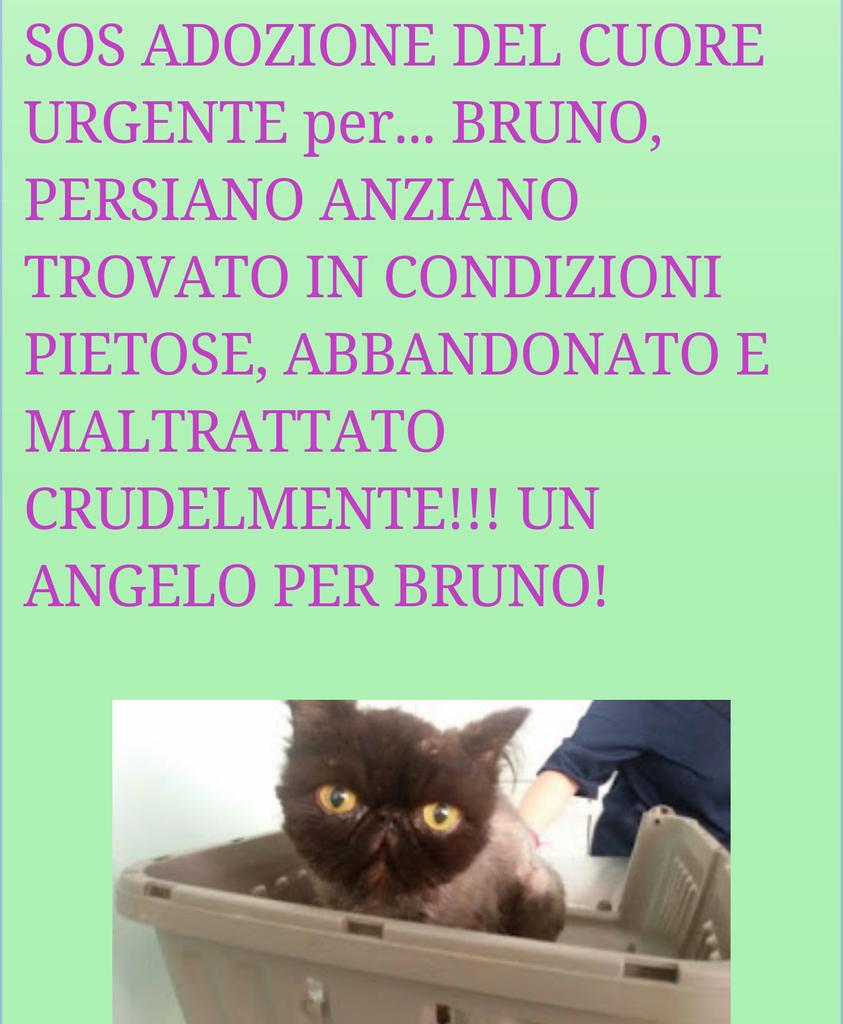 #URGEADOZIONEdelCUORE X BRUNO PERSIANO ANZIANO ABBANDONATOeCRUDELMENTE MALTRATTATO INFO FOTO http://larcadinoe26.blogspot.it/2015/08/sos-adozione-del-cuore-urgente-per_32.html?m=1…pic.twitter.com/PG75OjYgWk