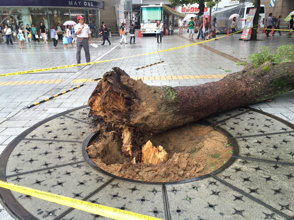 浜松駅遠鉄百貨店の前の木が折れてた!! pic.twitter.com/lGTLb2NzrE