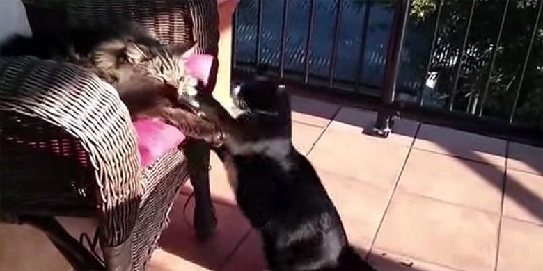 Cats Are Adorable! (Not Really They're Total A-Holes As This Compilation Shows) http://t.co/TAel7exzmy http://t.co/Af8no5orMs