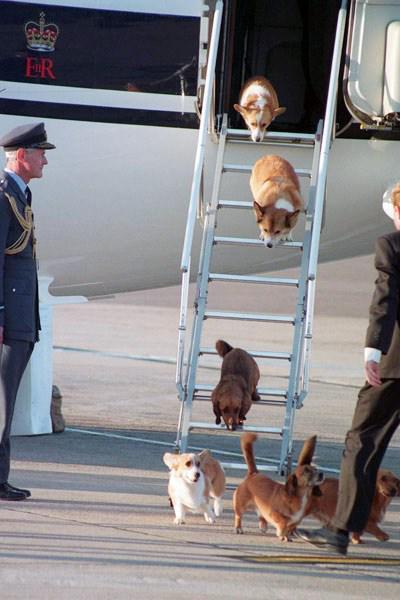 女王様んちのワンコの飛行機のタラップを乗り降りする姿がかわいくて悶絶♡ pic.twitter.com/l7nUfnIRu8