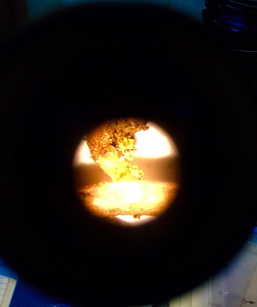 Phylloxera through a microscope lens. Awesome! #CatenaWineScience #UCDavis http://t.co/X7WrRscxPI