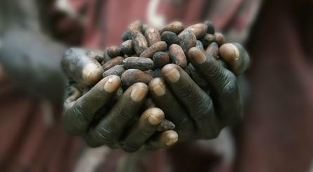 Sfruttamento dei bambini nei campi di cacao in Costa d'Avorio.