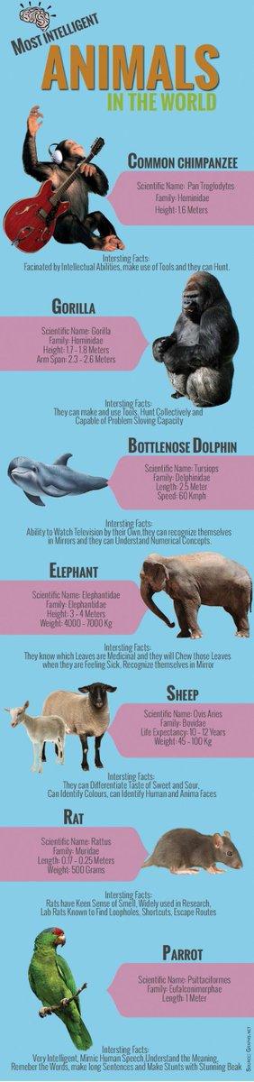 MyRepública On Twitter Infographics Most Intelligent Animals In - 25 intelligent animals world