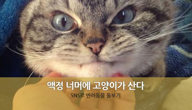 액정 너머로 이웃집 고양이를 보는 재미에 푹 빠지셨나요~?  무엇때문에 SNS를 통해 반려동물을 보는 재미에 푹 빠진 것일까요?  혹 쓸쓸함과 관련된 것은 아닐까요?  http://t.co/hvL5OCyRlI http://t.co/WUh01o3X99