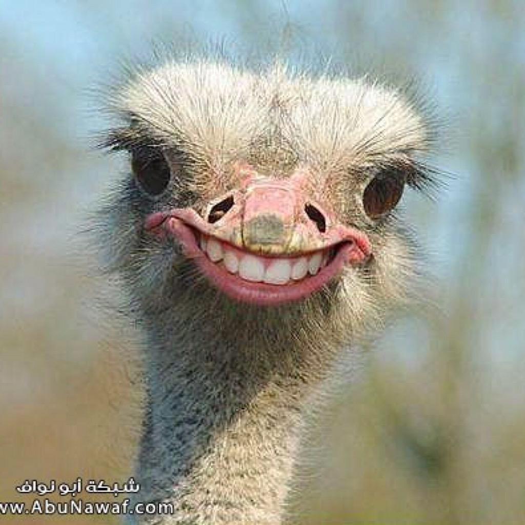 Ostrich Dick