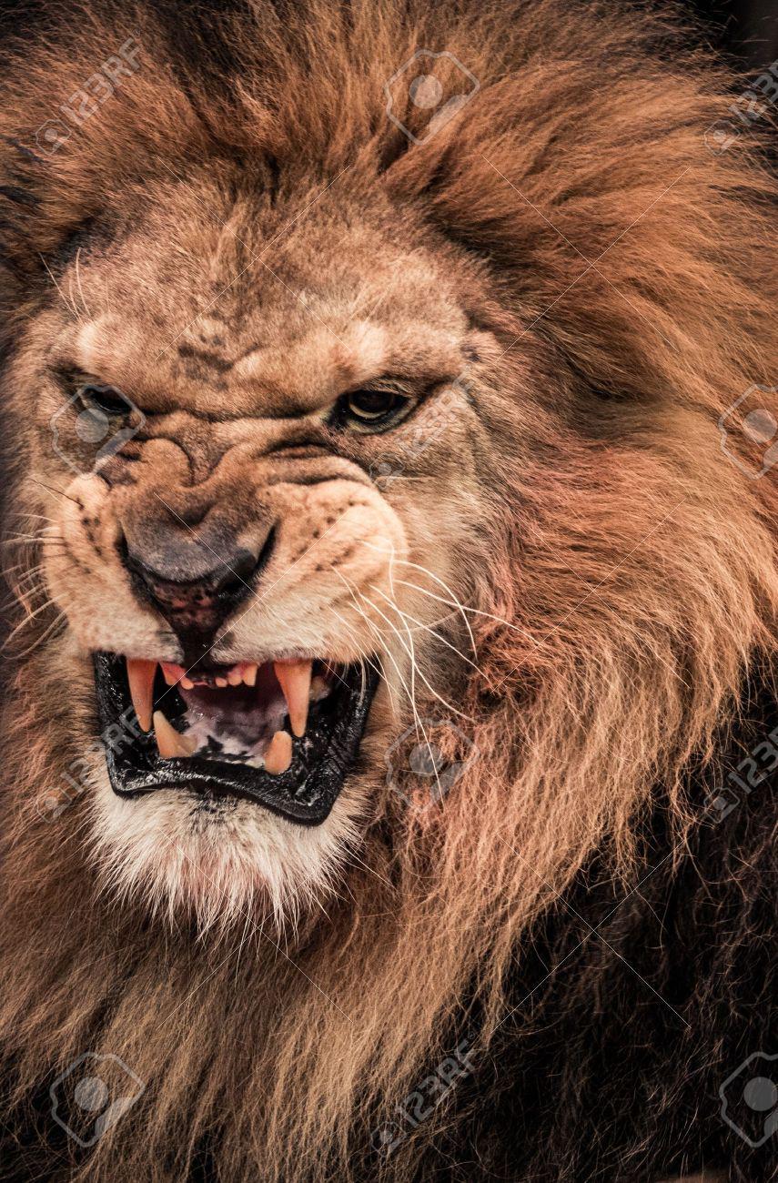 Roaring Lion Profile Tattoo Daddy Khalil on Twitte...