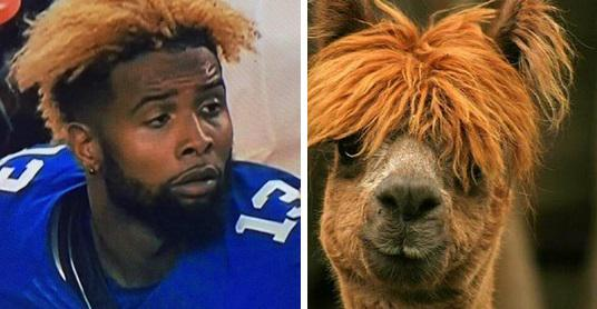 Larry Brown On Twitter The Odell Beckham Jr Hair Memes Are Out