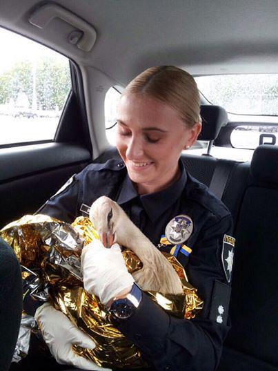 Новые патрульные после погони задержали автомобиль, водитель которого не имел документов, а в машине нашли пакет с белым порошком - Цензор.НЕТ 8621